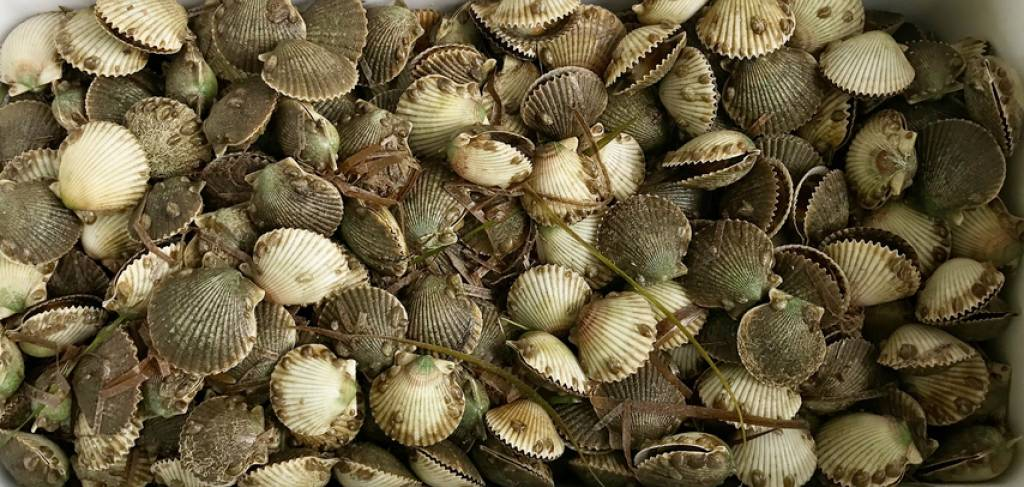 Scalloping in Cape San Blas